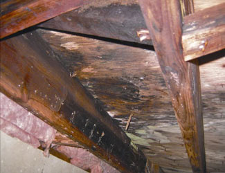 mold and rot in a Mesa crawl space